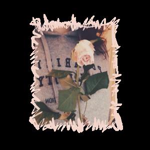 Rosa Rose Frau Foto Bild Blume Schrift Vintagestil