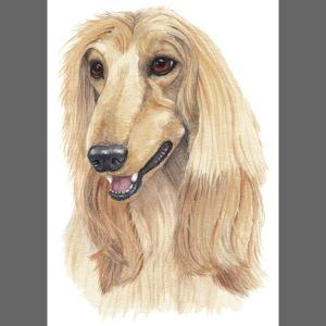 Afghan hound sticker