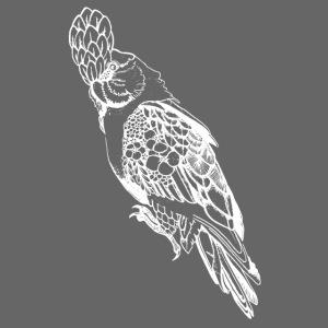 Kakadu weiß