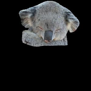 Koala Bär in Brusttasche Hemdtasche pocket