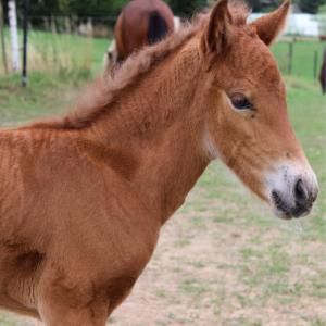 Pferd Fohlen reiten Pferdeposter Tier Geschenk