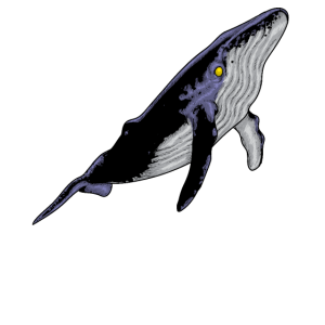 Blauwal Walart Meeressäuger Meeresbewohner
