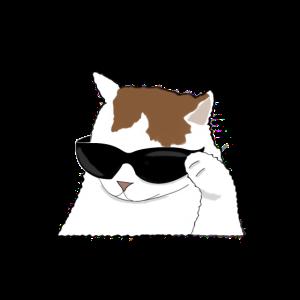 Cool Cat meme