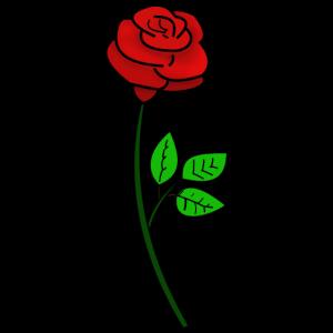 ROSE LOVE LIEBE