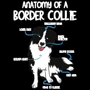Anatomie Border Collie Hunderasse