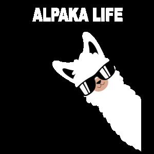 Lustiges Alpaka Design Alpaka Style Spruch