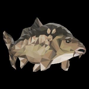 Karpfen Fisch