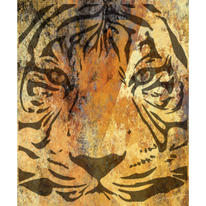 Tiger Raubtier Tigerkopf