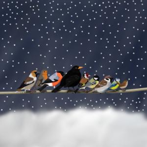 Vögel im Schnee Mund-Nasen-Maske Weihnachten