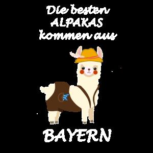 Die besten Alpakas kommen aus Bayern