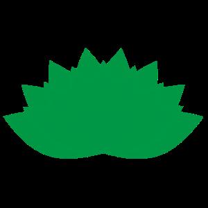 gruene lotusbluete