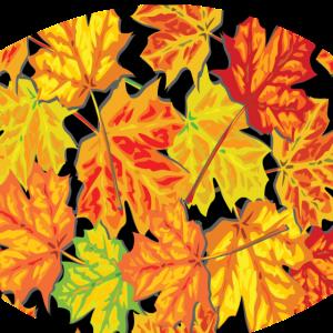 Herbst Herbstblätter Jahreszeit Ahornblätter