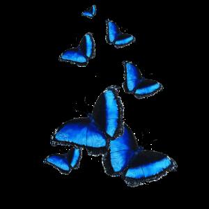 Schmetterlinge im Bauch Geschenkidee Symbol
