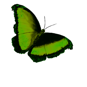 grüner Schmetterling Green butterfly Geschenkidee