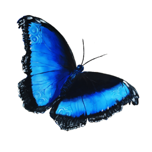blauer Schmetterling Geschenkidee Symbol