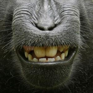 Lustige Maske Gesichtsmaske Affe Gesichtsschutz