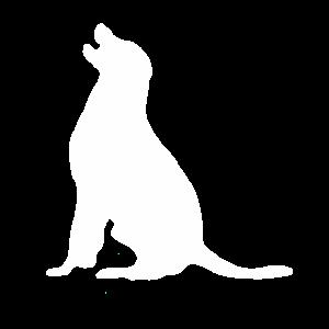 Hund Labrador Hunde Beagle Haustier Dog Silhouette
