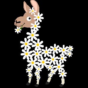 Gänseblümchen lustiges Alpaka aus Blüten