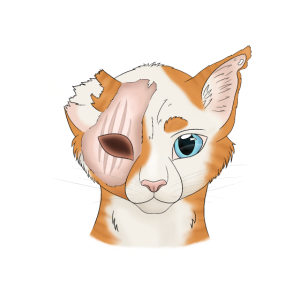 Lichtherz - Warrior Cats