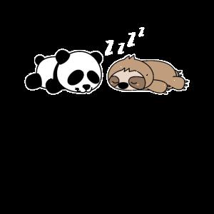 Faultier Panda Tiere