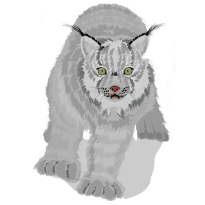 lynx - Luchs