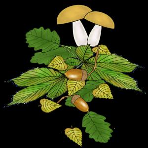 Pilze, Herbst, Laub