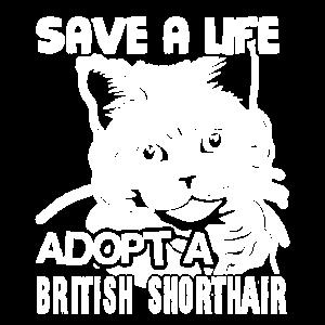 Adoptiere ein Britisch Kurzhaar Rette ein Leben