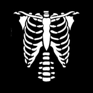 Skelett Oberkörper
