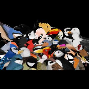 Viele Vögel Vogelmotiv Mund-Nasen-Maske Weiß