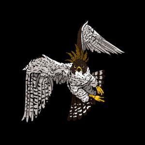Greifvogel in der Luft Geschenk für Falken Freunde