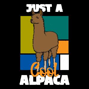 Alpaka Alpakas Alpaca