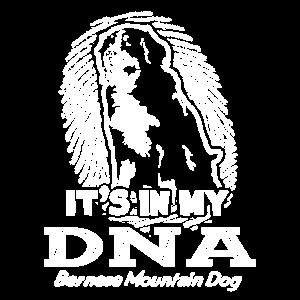 Berner Sennenhund in meinem DNA-Shirt