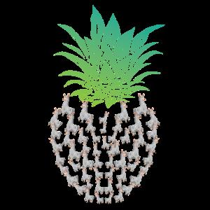Ananas Lama Südamerika