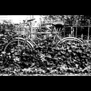 Fahrrad New York