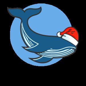 Blauwal Santa Wal Blauwale Orca Delfin Meer Wasser