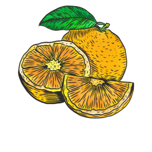 Frische Orange Frucht illustration