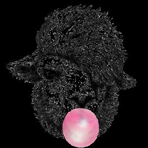 Kaugummi aus Alpaka