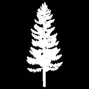 Norfolk Pine Tree Tattoo Design Geschenkidee