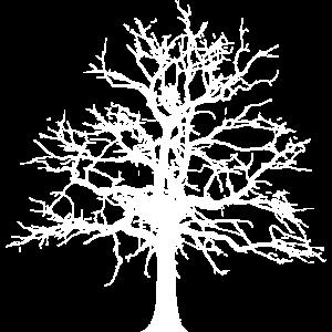 Baum Winter Herbst