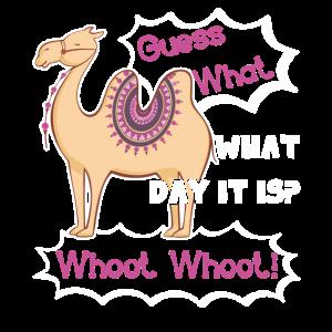 Kamel Lustiges Kamel