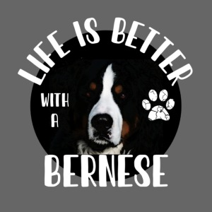 Life is better with a bernese
