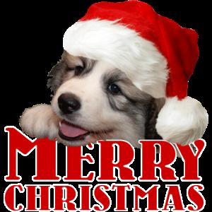 Pyrenäen-Sennenhundewelpen Weihnachten