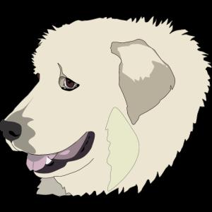 Pyrenäen-Sennenhund