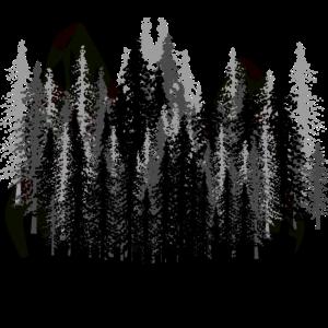 Dark Fantasy Natur Gruselig Wildnis Wald Karpaten