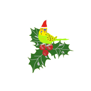 Weihnachts Wellensittich mit Stechpalme, Budgie