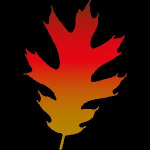 Herbst Eichenblatt
