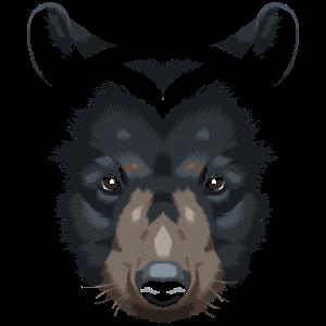 Bär Grizzly