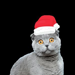 Lustige Katze mit Weihnachtsmütze