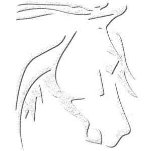 Pferdekopf - Pferde Zeichnung - Reiten - Reiterin