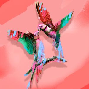 vogel,papagei, fliegen,bunt,illustration,maske
